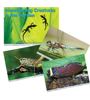 Investigating Creatures in the Garden Poster Set